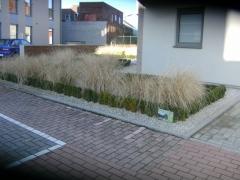 Resultaat aanleg tuin met buxus en siegrassen