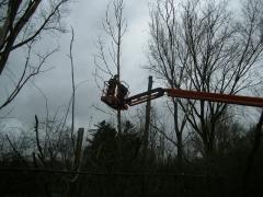 Inkorten bomen met hoogwerker