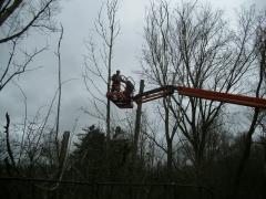 Trimmen bomen met hoogwerker