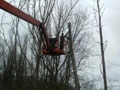Afzagen bomen met hoogwerker