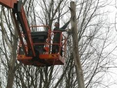 Snoeien bomen met hoogtewerker
