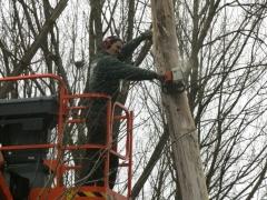 Afzagen bomen met hoogtewerker